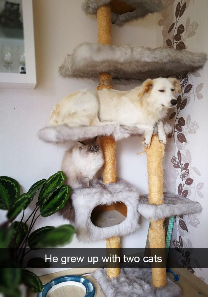 4.Cat-Dog