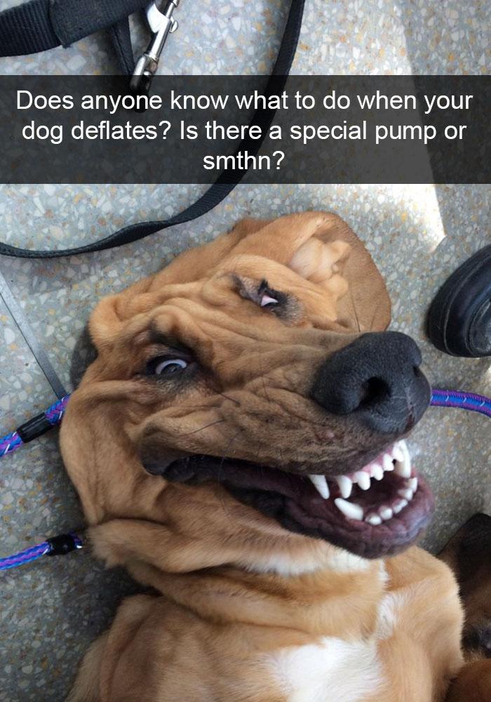 9. Deflated Dog