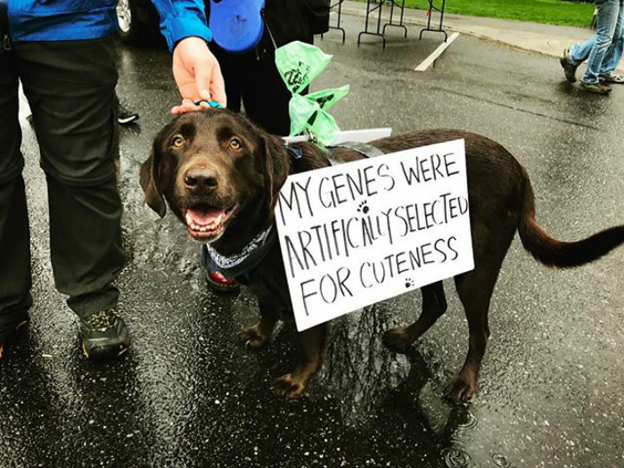 The canines came to the protest with posters that expressed their views, ranging from the ones saying that cats are #alternativefacts, to those agitating to 'support Labs', to Golden Retrievers making their point clear with a 'Science Is Golden' poster.