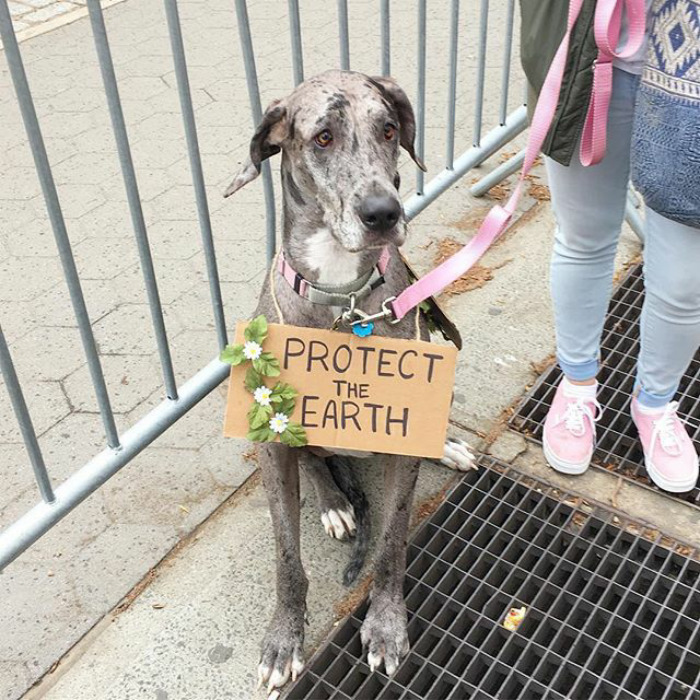 With some of the most powerful world leaders being in denial about science-backed things like climate change, no wonder the situation got so bad, even the dogs decided to protest in the March for Science.