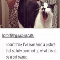 24 Tumblr Posts Every Cat Owner Will Immediately Recognize