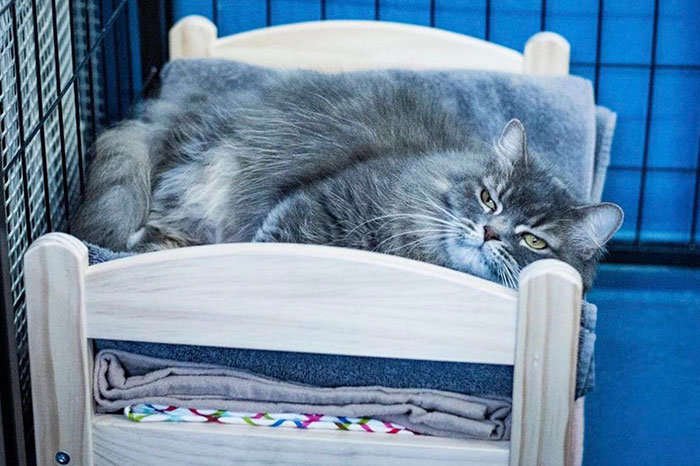 "Until recently, kitties at the Etobicoke shelter would sleep on the ""cold, hard floor"""