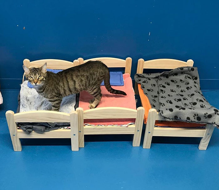 """Now cats like Catsby and Frankie have beds of their own to curl up in"""