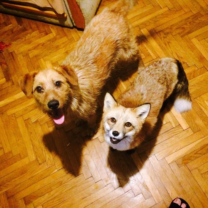 Those are our pets, Jay the fox and Saimon