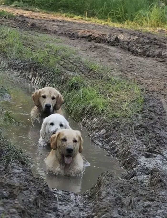 14. Dogs In Mud