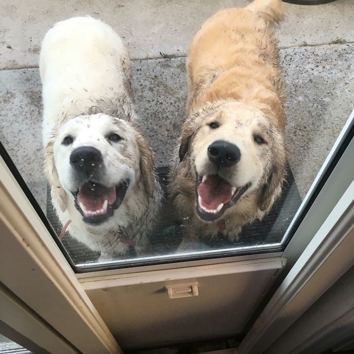 11. Just Gave These Two Assholes A Bath...