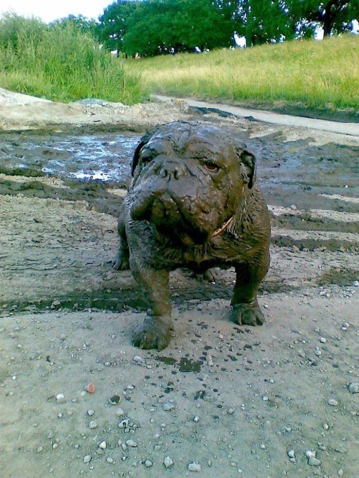 3. My Dog Has Mud Skills Man