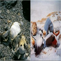 These Dead Bodies Are Lying On Mt. Everest For Years But What's The Reason?