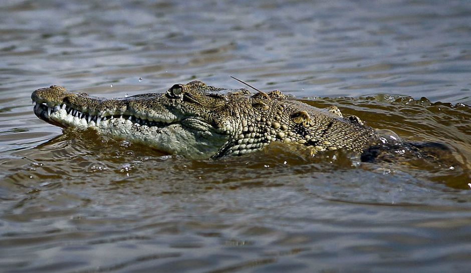 Instead three crocodiles appeared and tore him apart in just a few minutes and all that was left was a pair of sandals and his underwear floating above the water.