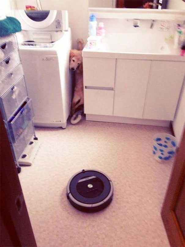 Roomba, The Nope Of Dog World