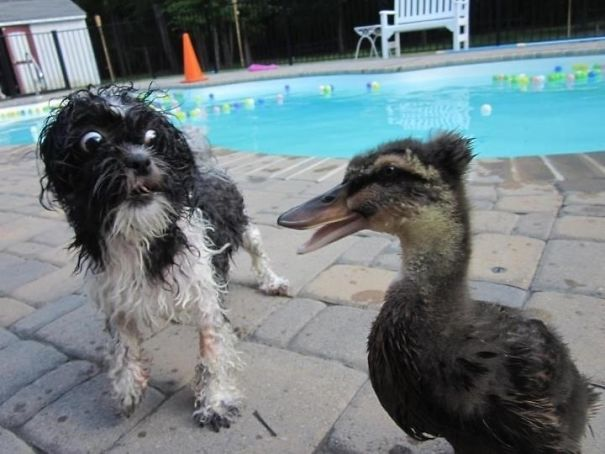What The Duck Is Going On Here