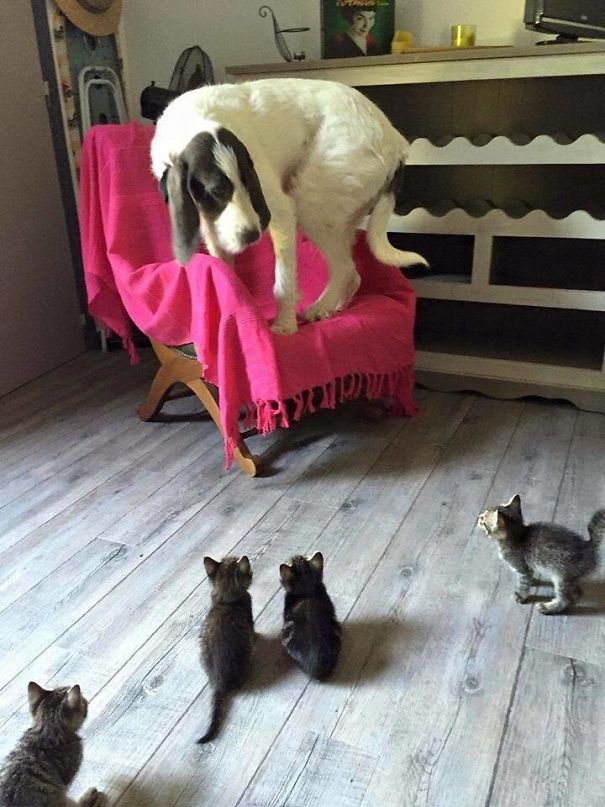 Kittens Are Scary