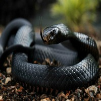 Incredibly Rare Black Animals That Actually Exist (Video)