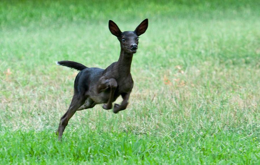 3. Black Fawn Deer