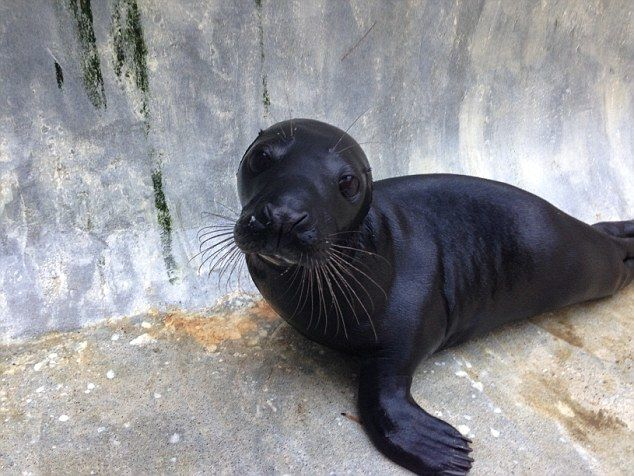 8. Black Seal