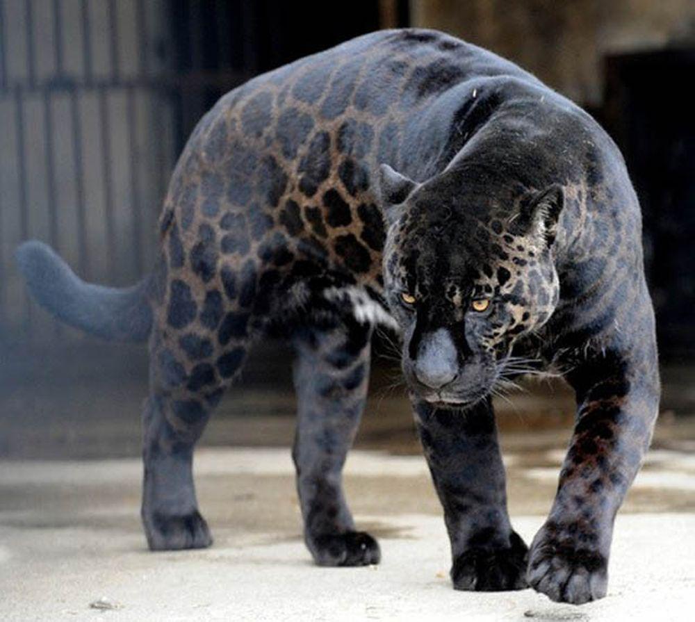 1. Black Panthers