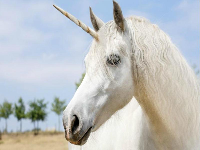 #1 Unicorn