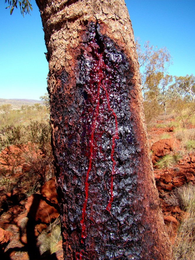 Would you be freaked out if you saw this tree and didn't understand that this was sap, not blood?