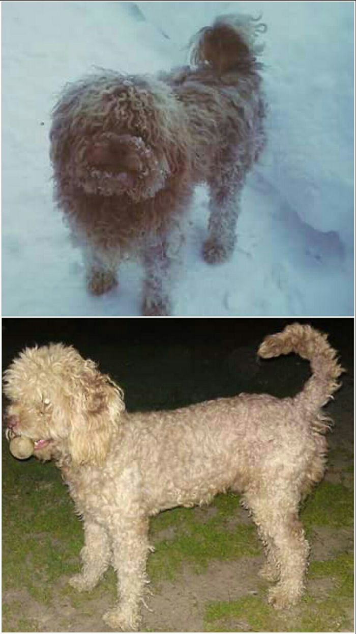 10.My Dog, During The Winter With Long Hair And During The Summer With Short Hair.