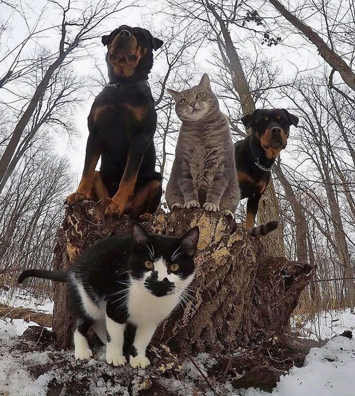 #5 The Meow-Tang Clan Pose For Their Debut Rap Album