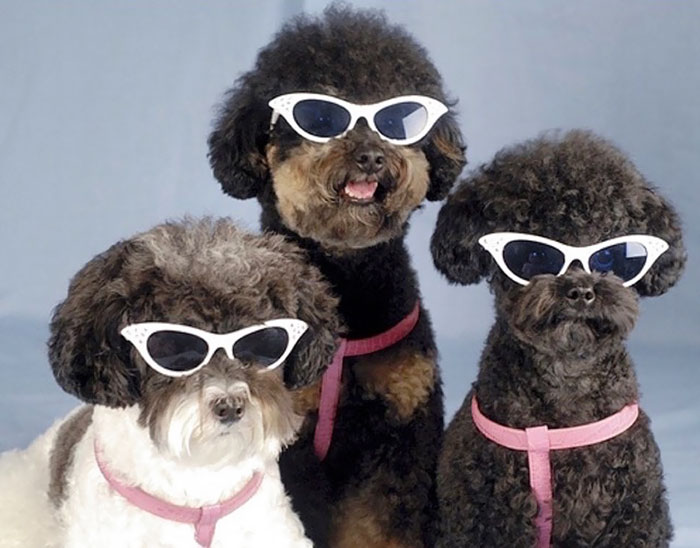 #20 Why These Dogs Look Like They About To Drop The Most Soulful Motown Album Of 1965