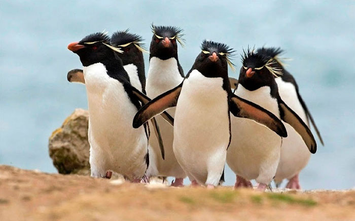#10 The Electronic Rock Penguins