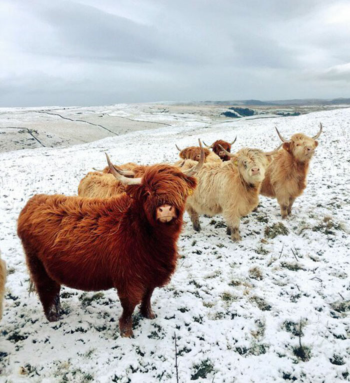 #6 These Cows Look Like They're About To Drop The Hottest Indie Rock Album Of The Year