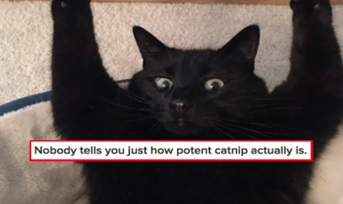 17 Things Nobody Tells You About Owning A Cat