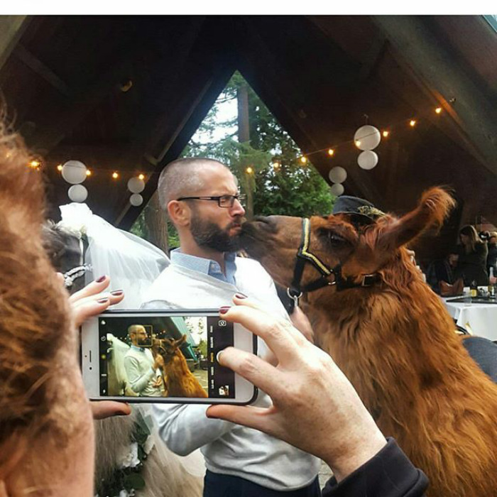 So, if you're planning on having a wedding in Portland, OR, or Vancouver, WA - hit these llamas up!
