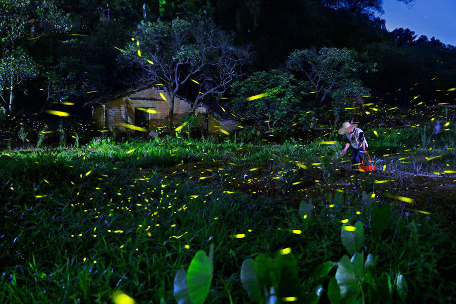 14. Zhu Jianxing of China submitted this glowing invasion in the Open Competition, Travel category.