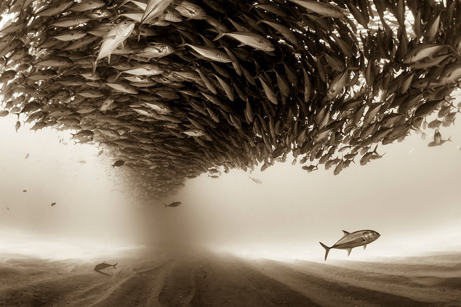 7. Christian Vizl of Mexico submitted this photo under the Professional, Natural World category, and it's very fishy.