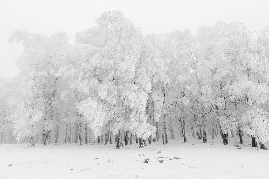 16. Frederik Buyckx of Belgium submitted this photo of a white winter to the Professional, Landscape category.