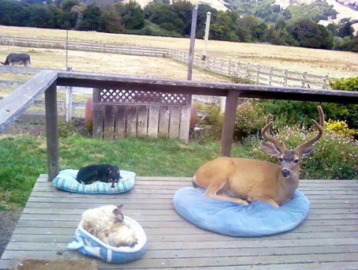 #2 Oh Deer
