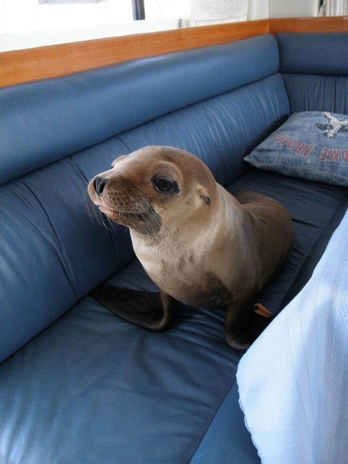 #11 This Little Guy Jumped Onto Our Boat Strolled Into The Cabin And Made Himself At Home On The Couch
