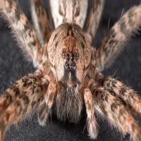 Spiders Could Eat Every Human On Earth In One Year