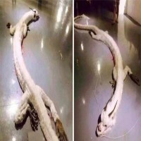Photos Of Dragon Shot Dead In A House Are Going Viral