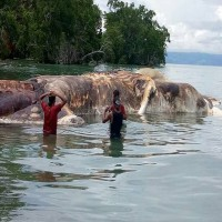 WTF Is This Terrifying Sea Monster That Washed Up In Indonesia?