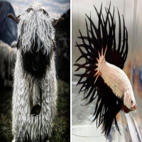 14 Of The Most Metal Animals Ever