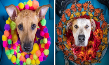 This Girl Turned Doggie Cones Of Shame Into Works Of Art And It's The Cutest Thing You'll See All Day