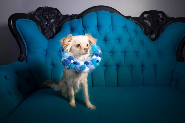 Erin chose a few dogs from the shelter and with the help of some fellow volunteers, decorated the cones and had a doggy photoshoot. The final results are absolutely adorable.