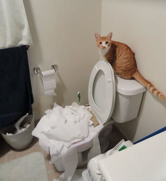 I've Been Toilet Training The Cat. I Think He's Learning Too Well
