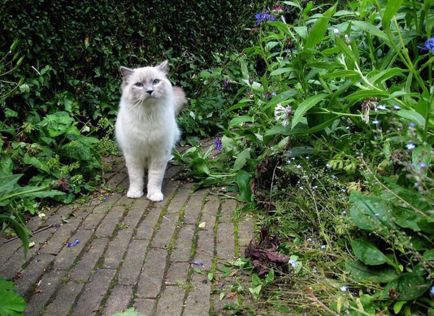 10. Keep Cats Out Of Your Garden