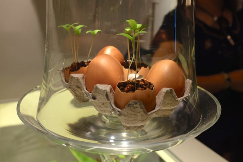 8. Start Seedlings