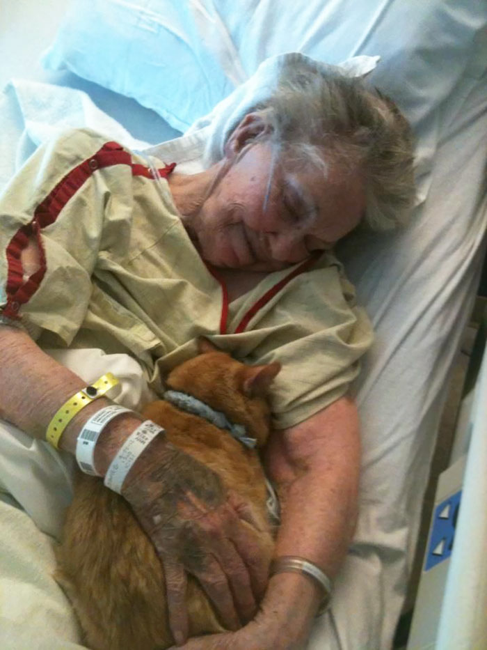 3. Her Dying Wish Was To See Her Best Friend, Oliver The Cat, One Last Time To Say Goodbye