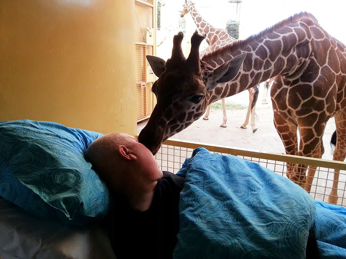 7. Cancer Patient Mario, 54, Says Goodbye To The Giraffes At Rotterdam Zoo, Whose Enclosure He Used To Clean