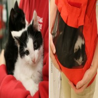 These Kitten Björns Are Helping Feral Cats Find Their Forever Home