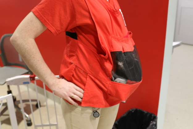 The hands-free vest allows an ARL staffer to go about their daily tasks while cradling the kittens, monitoring them closely as they safely experience stimuli.