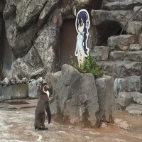 This Story About A Penguin Falling In Love With An Anime Cutout Is An Oscar-Worthy Love Story