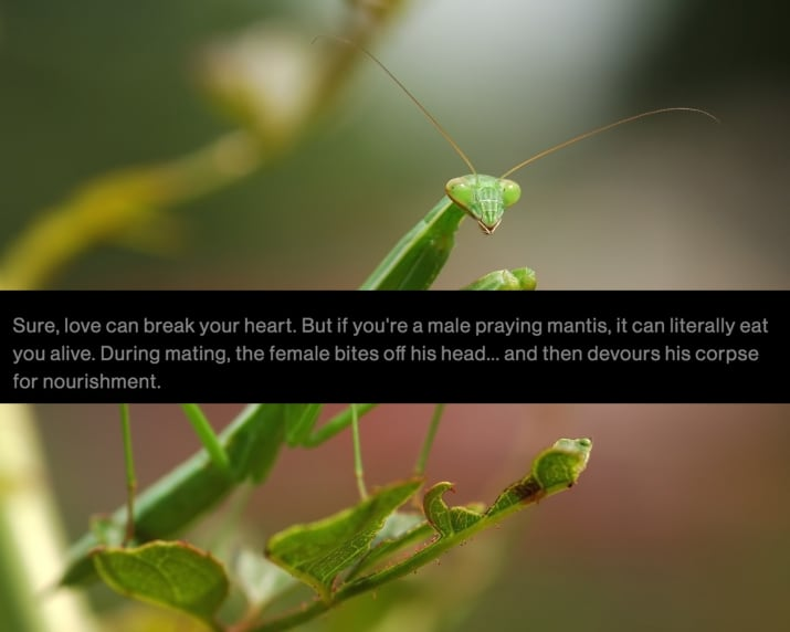 9. Praying mantis or J-Woww from Jersey Shore???? Either way, relatable.