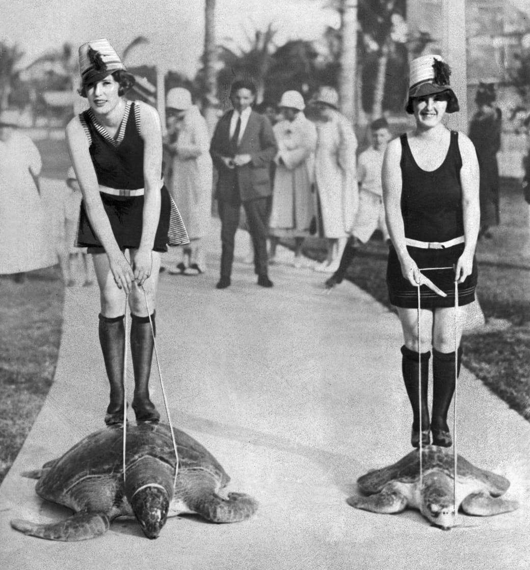 1. Competitive sea turtle racing, 1925: